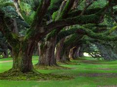 Les forêts - Batiweb