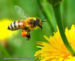 Lancement du portail de l'année internationale de la Biodiversité
