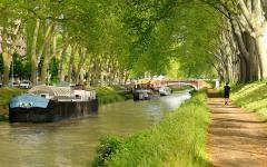 Replanter les 42.000 platanes du Canal du Midi - Batiweb