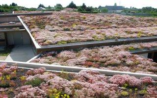 Nantes accueille le Congrès mondial des toits et murs végétalisés - Batiweb