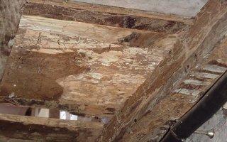 Un mémento technique pour les professionnels du risque termite - Batiweb