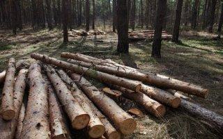 """Les professionnels du bois se réunissent sous la bannière """"made in France"""" - Batiweb"""