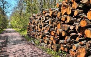 La filière bois-forêt se mobilise contre les exportations de grumes - Batiweb