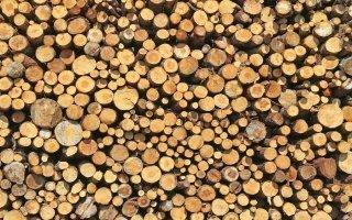 30 millions d'euros débloqués pour faciliter l'exploitation du bois Batiweb