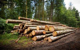 La filière bois signe sa première charte de contractualisation  - Batiweb