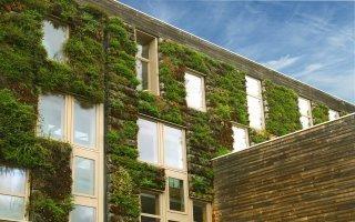 Végétalisation des bâtiments : trois nouvelles règles professionnelles publiées - Batiweb
