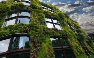 Les façades végétales pour une ville verte
