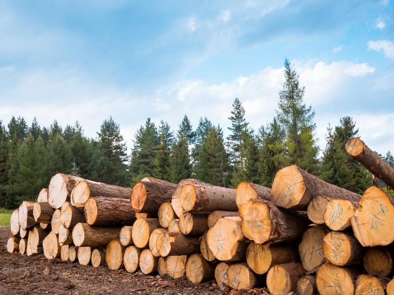 Le FCBA signe un accord-cadre pour une production durable du bois Batiweb