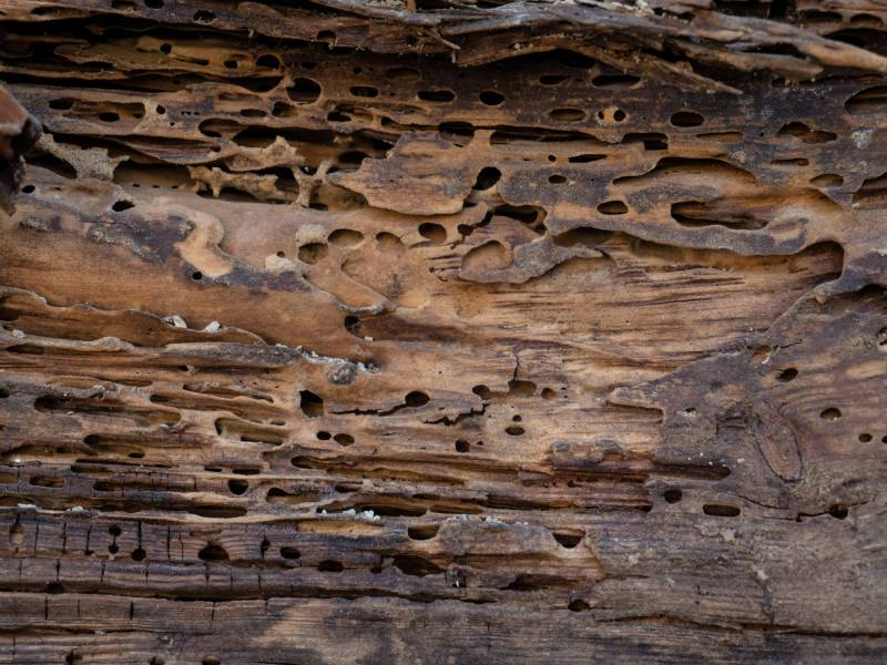Une méthode naturelle pour chasser les insectes du bois Batiweb