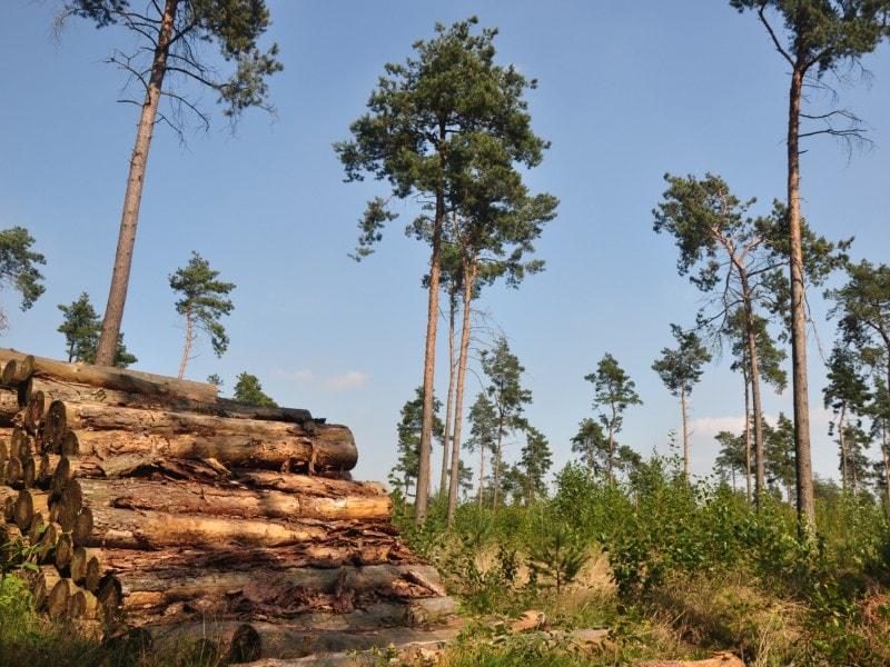 Vers un plan de soutien public pour la filière bois? - Batiweb