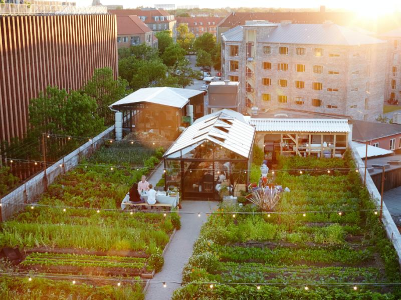 L'énorme potentiel des toitures végétalisées - Batiweb