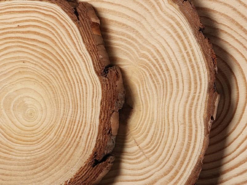 Promouvoir le bois-énergie, l'ambition d'un après-covid - Batiweb