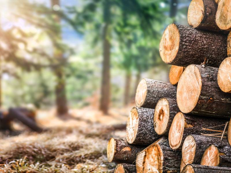 Fibois célèbre les forêts franciliennes - Batiweb
