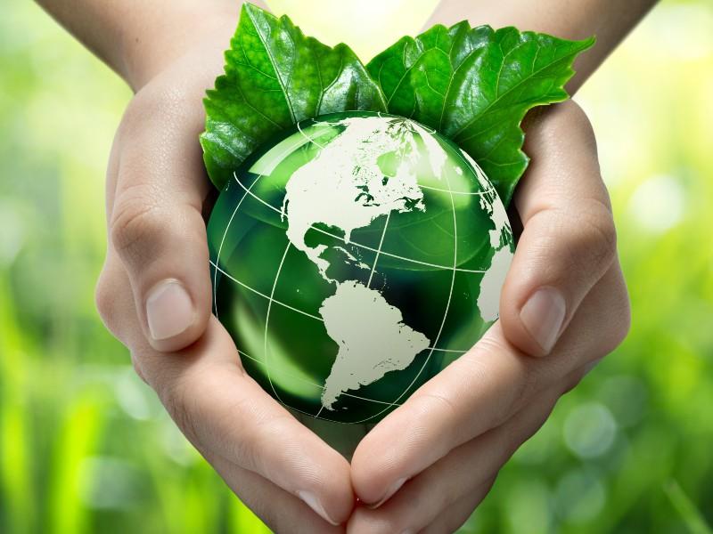 Kingfisher devient membre fondateur de l'initiative Forest Allies - Batiweb