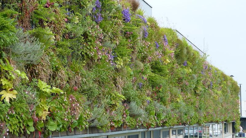 Lycée Hôtelier de Caen (Crédit Vertical Flore) Végétaliser une façade permet d'agir sur le confort thermique du bâtiment mais aussi de jouer un rôle de dépollution tout en garantissant un aspect esthétique bluffant et unique