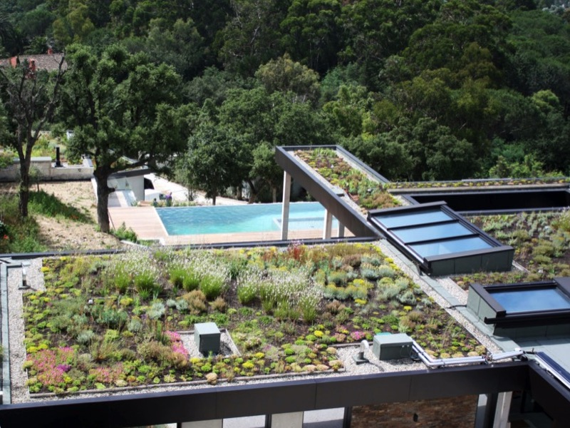 Toitures et façades végétalisées, un poumon vert pour la ville - Batiweb