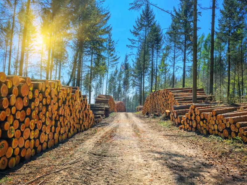 Le gouvernement annonce de nouvelles mesures en faveur de la filière bois - Batiweb
