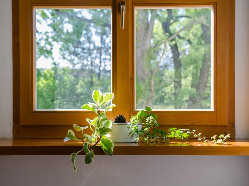 La fenêtre bois, un produit de plus en plus certifié - Batiweb