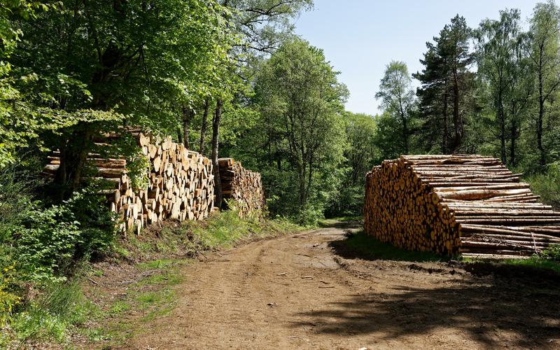 La filière bois lance une task force pour sécuriser les approvisionnements - Batiweb