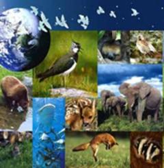 2007 ... Mettre la biodiversité au cœur des débats - Batiweb