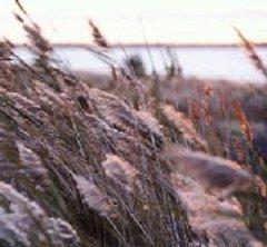 Une protection d'un tiers de notre littoral face à l'urbanisation - Batiweb