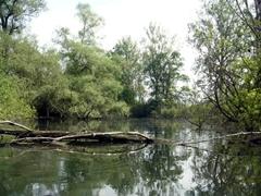 Création d'une nouvelle réserve naturelle nationale de la Petite Camargue alsacienne - Batiweb