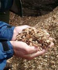 Areva investit sur la biomasse au Brésil - Batiweb