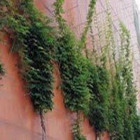 VEGETALISATION DE FACADE GREEN SOLUTIONS Batiweb