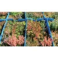 Toiture végétale Toundra'Box®  Batiweb