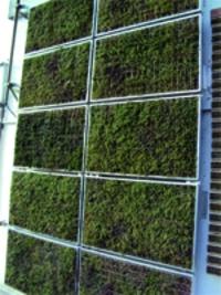 Ecran thermique végétale Vivagreen®  - Batiweb