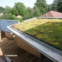 Solution d'étanchéité et de végétalisation pour toitures DERBISEDUM Batiweb