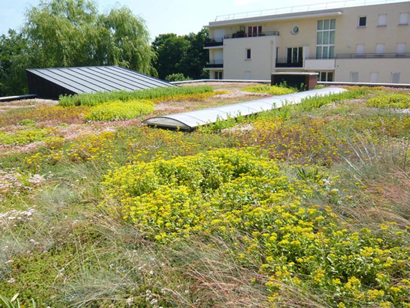 Toiture terrasse végétalisée - CANOPIA JARDIBAC - Batiweb