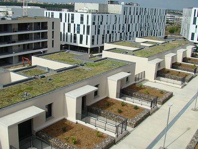 Systèmes pour toitures végétalisées : IKO SEMPERVIVUM Batiweb