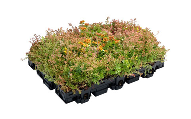 Bac de végétalisation Ecosedum - Batiweb