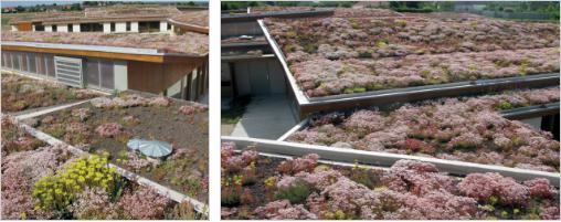 Des toitures végétalisées réussies avec le système Sika Sarnavert - Batiweb