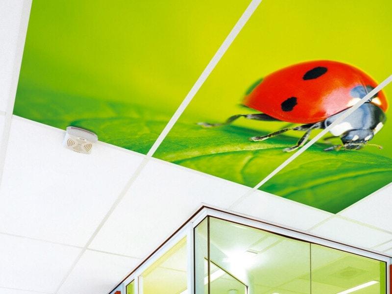 MyConcept : imprimez au plafond le visuel de votre choix ! - Batiweb