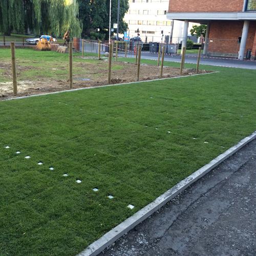 parking végétalisé