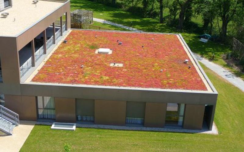 Création d'une toiture végétalisée sur toit plat - Batiweb